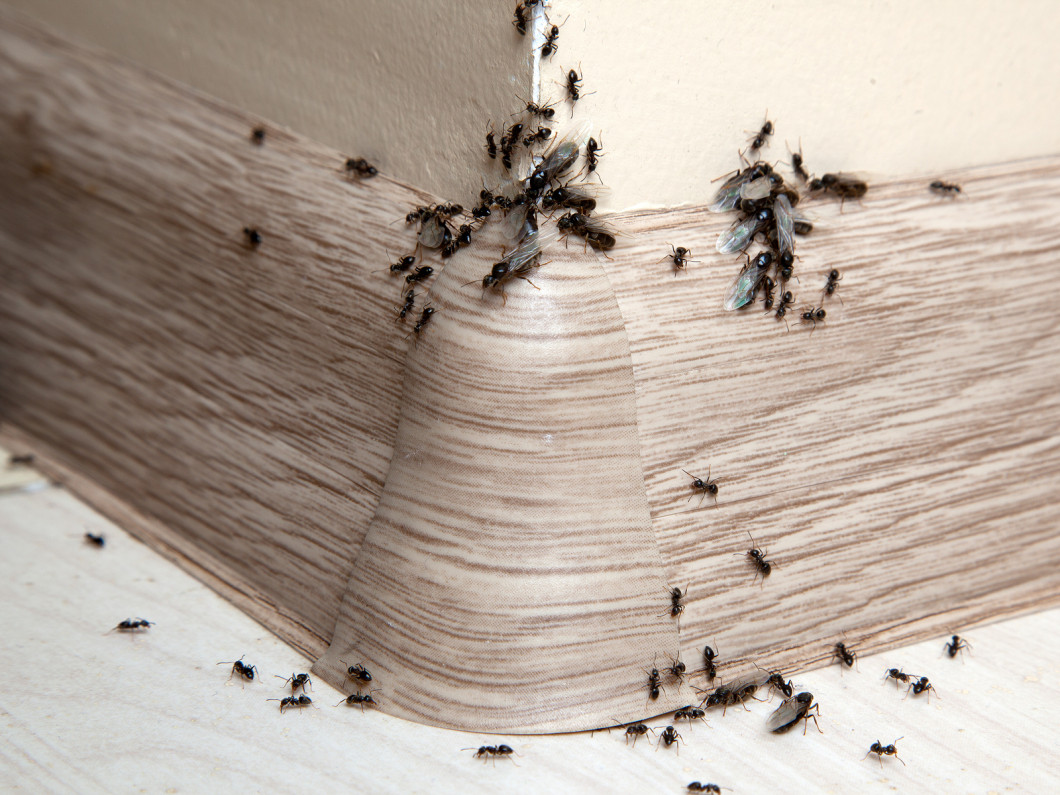 Give Those Ants Their Marching Orders